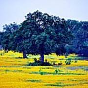 Yellow Wildflowers After Sunrise Poster
