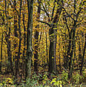Yellow Woods On A Rainy Day Poster
