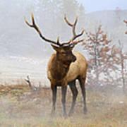 Yellowstone Bull Elk Poster