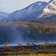 Yellowstone Morning Poster
