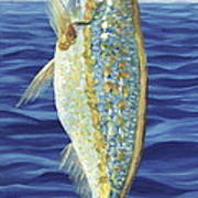 Yellowtail On The Menu Poster
