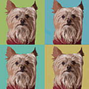 Yorkie Times Four Poster