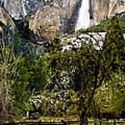 Yosemite Apple Orchard  Poster