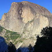 Yosemite Half Dome With Cottonwood Trees Poster