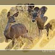 Yosemite National Park - Deer Poster
