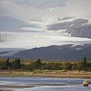 Young Grizzly Fishing At Hallo Bay Poster