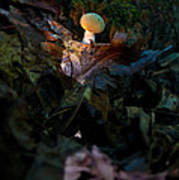 Young Lonely Mushroom Poster