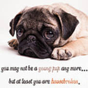 Young Pup Poster