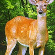 Young Whitetailed Deer Buck Digital Art Poster