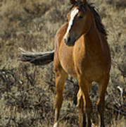 Young Wild Mare   #0307 Poster