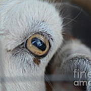 Your Friendly Neighborhood Goat 2 Poster
