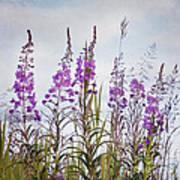 Yukon State Flower Poster
