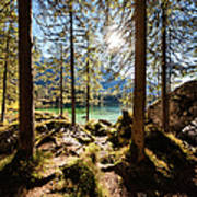 Zauberwald In Autumn Poster