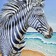 Zebra By The Sea Poster