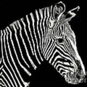 Zebra Faa Contest Poster