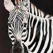 Zebra facing left Poster