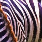 Zebra Lines Poster