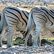 Zebra Lineup Poster