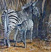 Zebra Mother And Foal Poster