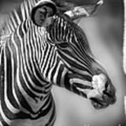 Zebra Profile In Black And White Poster