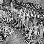 Zebra - Rainy Day Series Poster