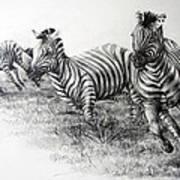 Zebra Running Poster