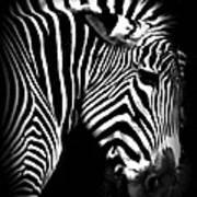 Zebra Strips Poster