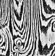 Zebras In Wood Poster