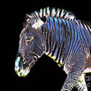 Zephyrus Zebra II Poster