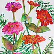 Zinnia And Ferns Poster
