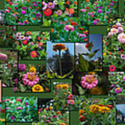 Zinnias Collage Rectangle Poster