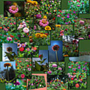 Zinnias Collage Square Poster