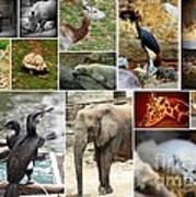 Zoo Collage Poster