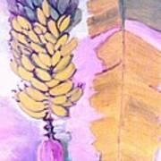 Florida Apple Bananas - 1 Poster