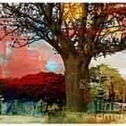 Baobab Poster