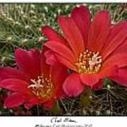 Cacti Bloom Poster