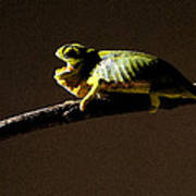 Chameleon On Branch Poster