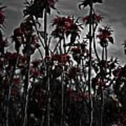 Mono Flowers Poster