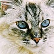 Pretty Blue Eyes--mia Poster