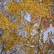 Reflecting Cedar Poster