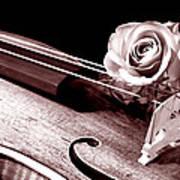 Rose Violin Viola Poster