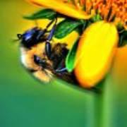 001 Sleeping Bee Poster