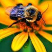 006 Sleeping Bee Series Poster