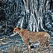 Alert Cheetah Poster by Darcy Michaelchuk