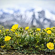 Alpine Meadow In Jasper National Park Poster by Elena Elisseeva