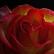 Annaversary Rose I  Poster
