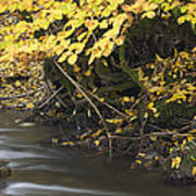 Autumn Flow Poster
