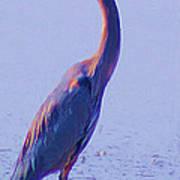 Big Blue Heron At Lake Side Poster