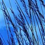 Blue Grass  Poster