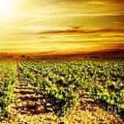 Bright Sunset At Vineyard Poster